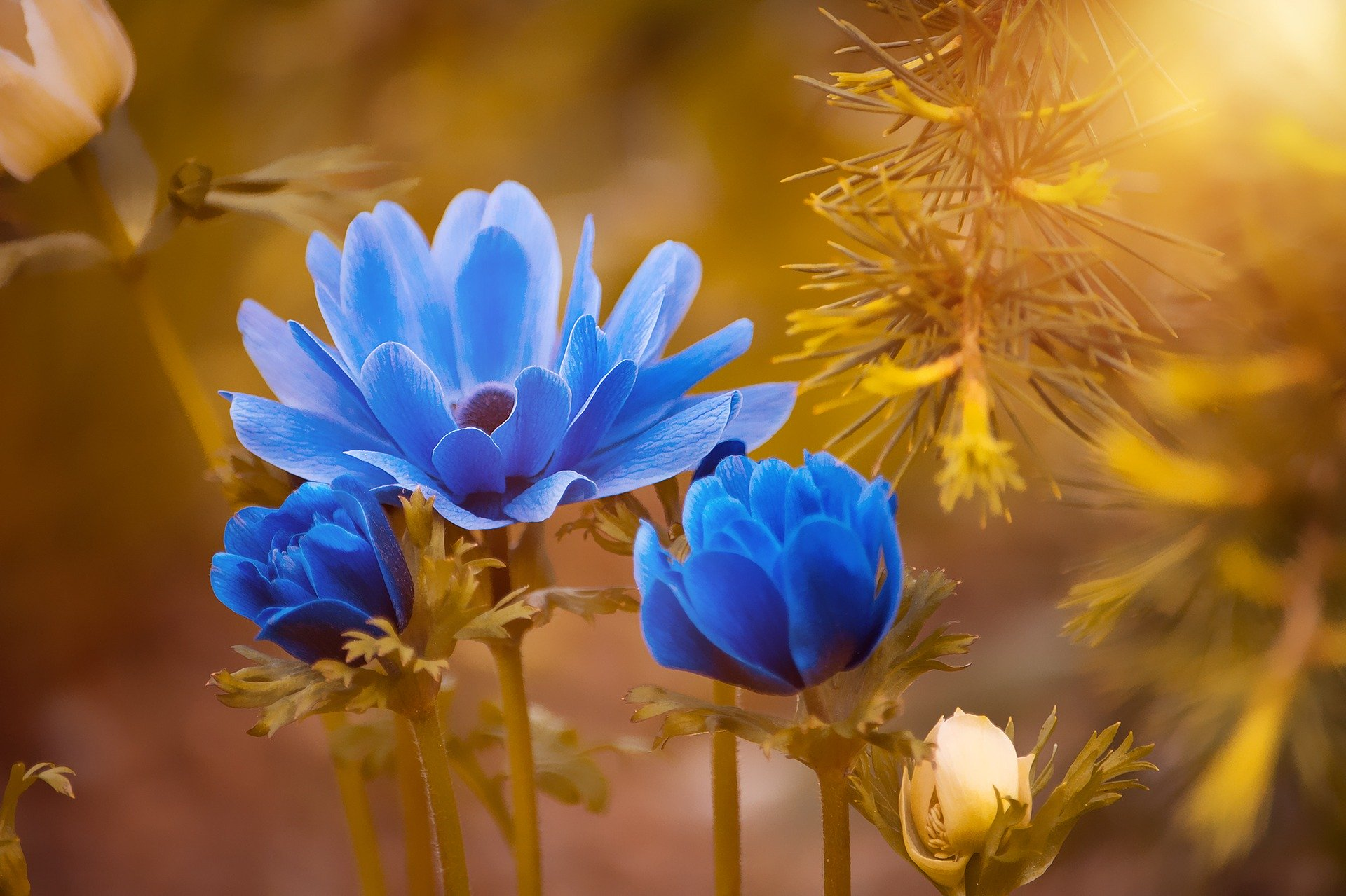 Three blue flowers surrounded by yellow and orange plants.