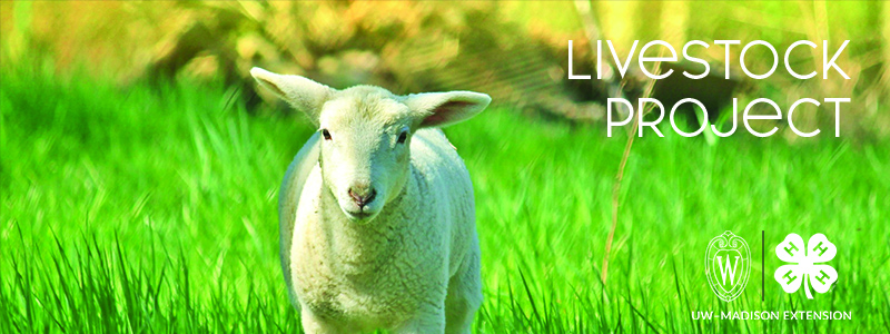 """A lamb and the words """"livestock Project"""""""