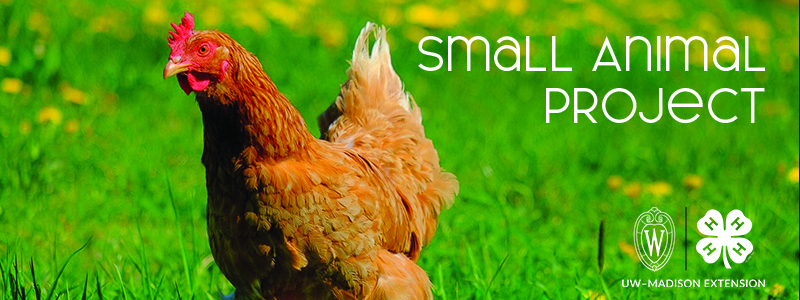 """A chicken and the words """"Small Animal Project"""""""